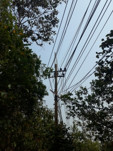 Paradise interrupted: an electricity pylon in middle of jungle