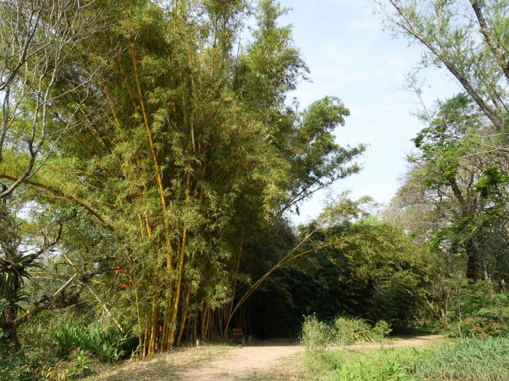 Bamboo in the Botanical Garden