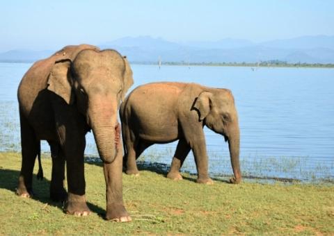 Udawalawe National Park: an ethical safari